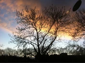 bomen voor de zendo