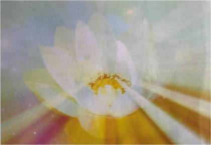 lotus licht